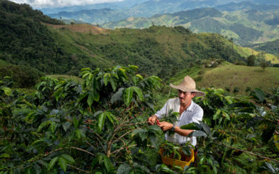 Spotlight on Colombia: Reducing deforestation amidst COVID-19 pandemic