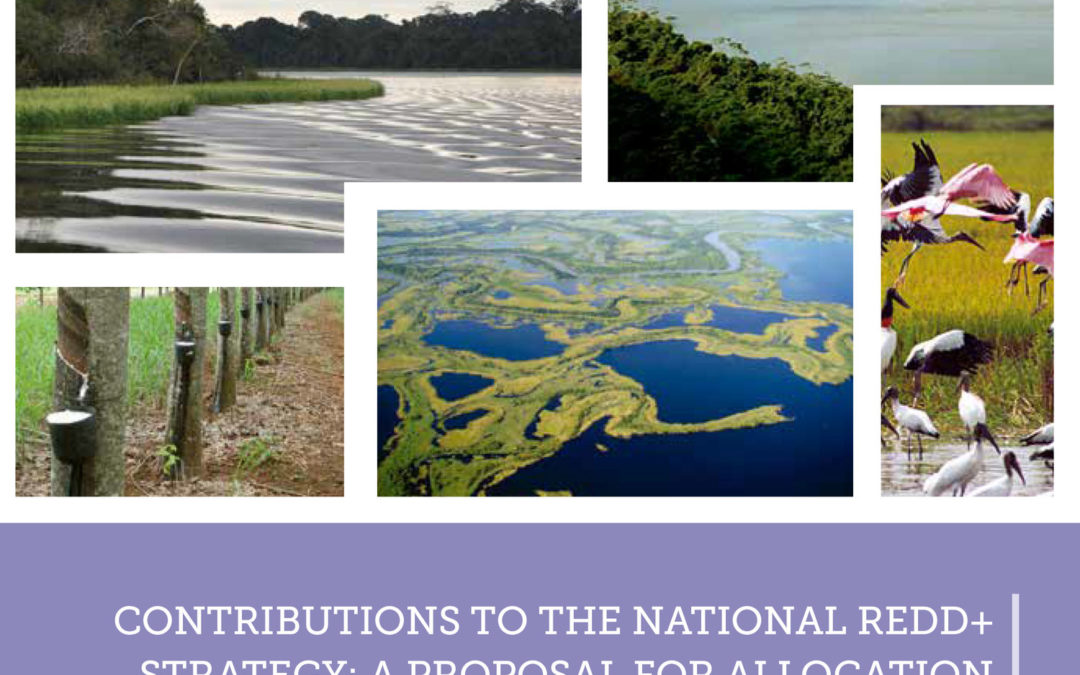Contributions to the National REDD+ Strategy
