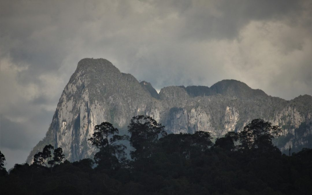 Reversing trends in deforestation in East Kalimantan, Indonesia