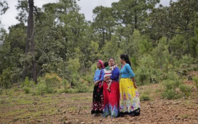 State Government and Indigenous Peoples in favor of sustainable rural development